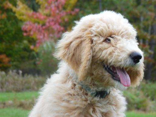 Older Dogs For Adoption